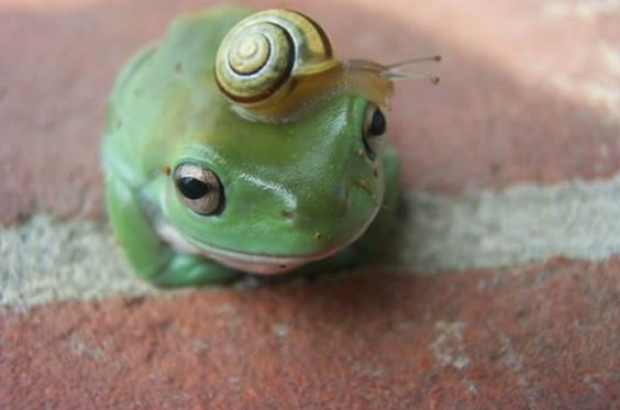 Frog & Snail