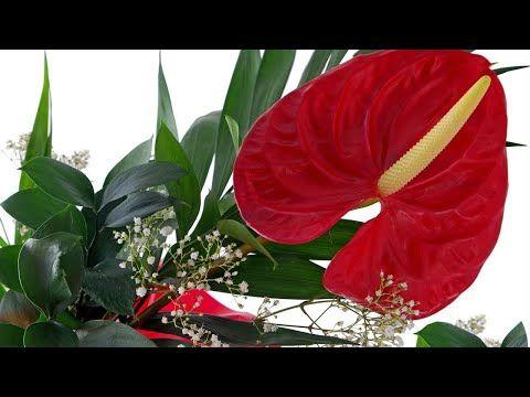 10 Piante Che Portano Felicita E Benessere A Casa Tua Lo So Youtube Plant Leaves Plants Flowers