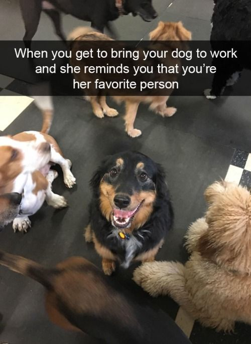 41 Funny Dogs To Brighten Up Your Day Funny Animal Memes Funny Dogs Cute Animals
