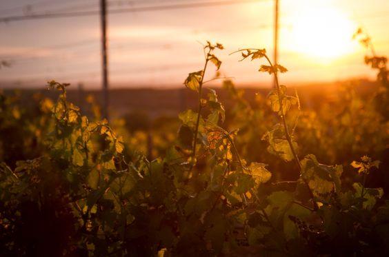 Una puesta de sol en nuestra finca. Una explosión de naturaleza. Un remanso de paz. Un océano de sensaciones al sur de Madrid, en Aranjuez.