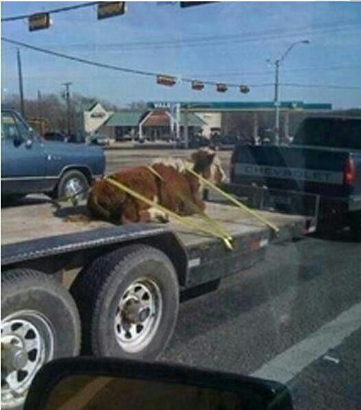 Cattle haulers lmao
