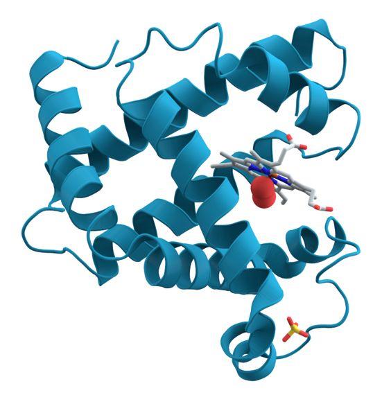 news le proteine suonano | lezioni di scienze