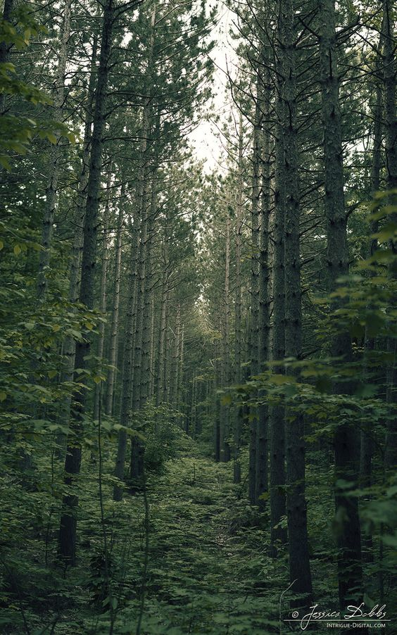 Deep Green Forest by =JessicaDobbs