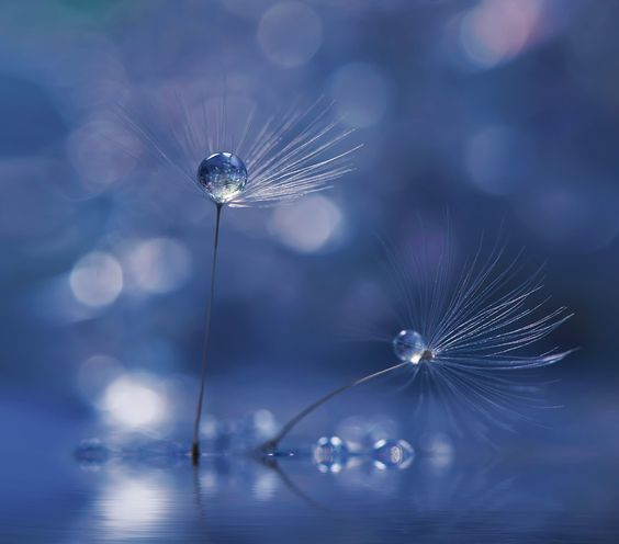 ~*~*~*~ by Juliana Nan on 500px
