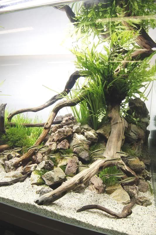 Aquarium driftwoodDecorative driftwoodPet home decor 21