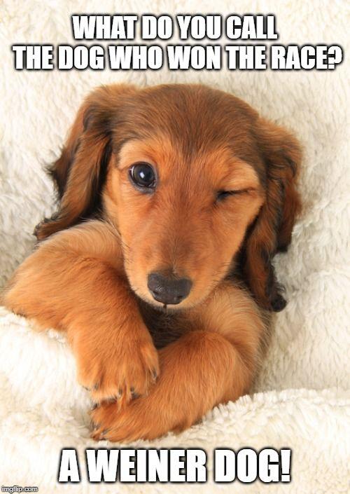 Dachshund Dog Meme Dog Owner Memes Dog Owner Humor Dachshund Memes