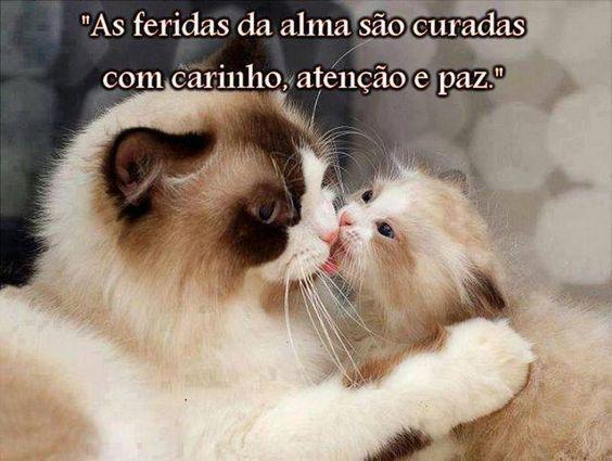 cartões_para_facebook_divertidos_engraçados_bom_dia_mulher_relacionamentos+(10).jpg (720×543)