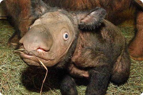 Самые странные животные на планете Земля (61 фото + текст)