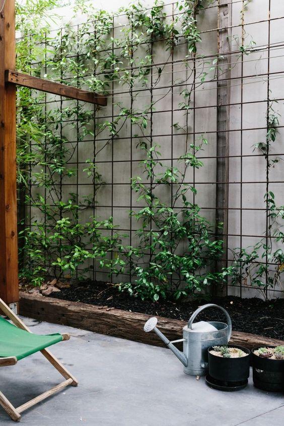plantes grimpantes sur façade