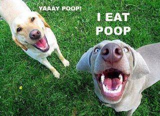 Fair disclosure: Giggle, Funny Stuff, So True, Yaaay Poop, Funny Animal, So Funny, Yay Poop, Poop Eater, Eat Poop