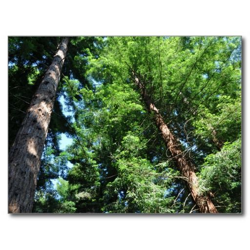 Longleat Forest Postcard. Click to buy from my Zazzle store.