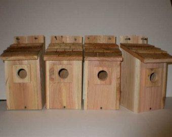 4 les maisons d 39 oiseaux oiseau bleu nid d 39 oiseau avec for Nid d oiseau sous toiture