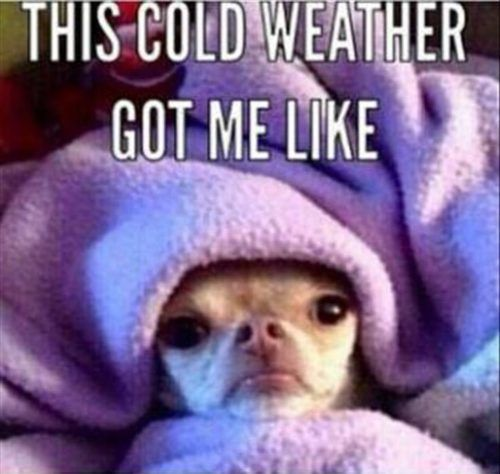 Enjoy our top 25 cute cold weather quotes as the temperature drops outside!