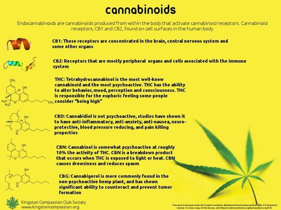 Cannabidiol Cannabinoid Cancer