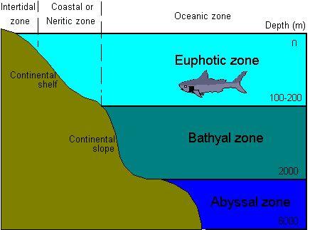 Pinterest the world s catalog of ideas for Ocean floor zones diagram