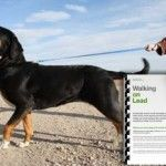 Teach your dog not to pull on lead with behaviourist and dog trainer Karen Wild
