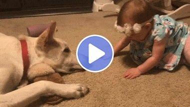 Menina reage com carinho ao conhecer o seu novo amigão
