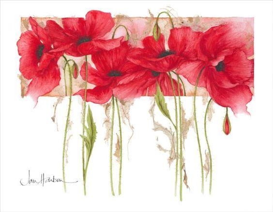 Poppies © Jan Harbon SBA(CBM) SFP SGM