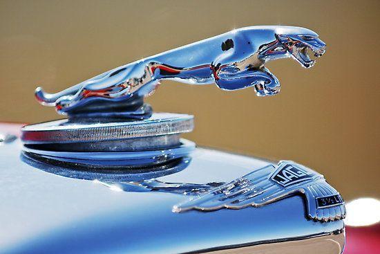 Jaguar Re Pin Brought To You By Lowcostcarins At Houseofinsurance Eugeneoregon Car Wheels Jaguar Cars Hood Ornaments