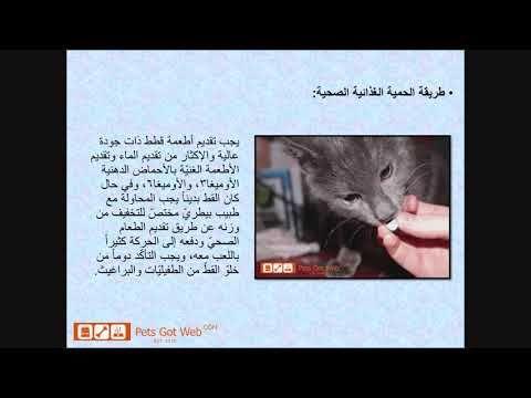 كيف أمنع تساقط شعر القطط بيتس جوت ويب لشراء وبيع الحيوانات الأليفة Petsg Art Pandora Screenshot