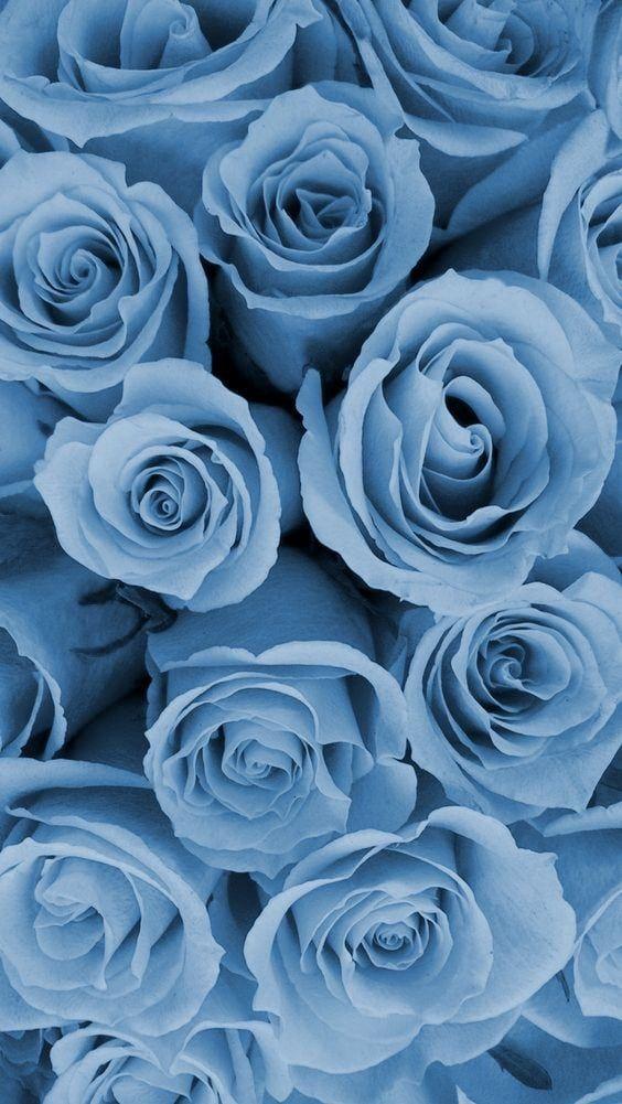 Blue Roses Wallpaper Blue Wallpaper Iphone Blue Flower Wallpaper