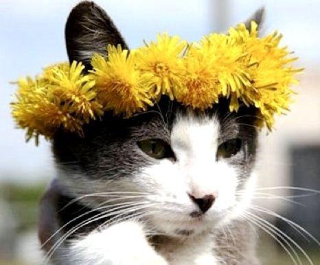 Cat Wearing Flower Garland