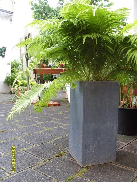 Welchen Farn Fur Kubel Seite Gartengestaltung Mein Schoner Garten