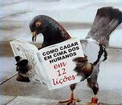 la paloma que lee un libro