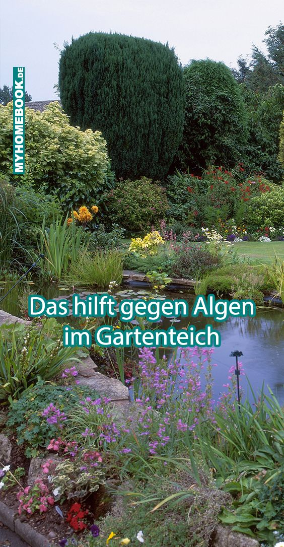 Das Hilft Gegen Algen Im Gartenteich Gartenteich Teich Algen Im Teich