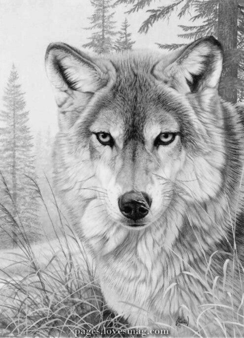 Wolf Coloring Web Page Grayscale Coloring Animal Drawings