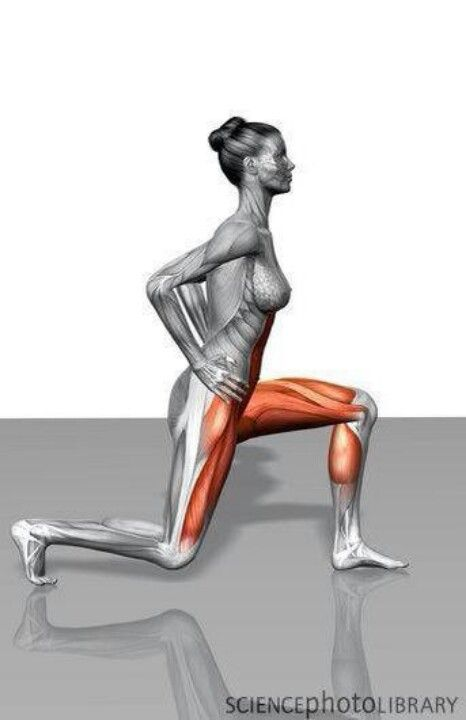 Muscles worked doing Lunges: