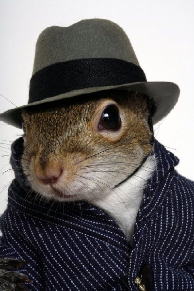 In my humble opinion, this is my very best photograph. Sugar Bush Squirrel at www.SugarBushSquirrel.com: