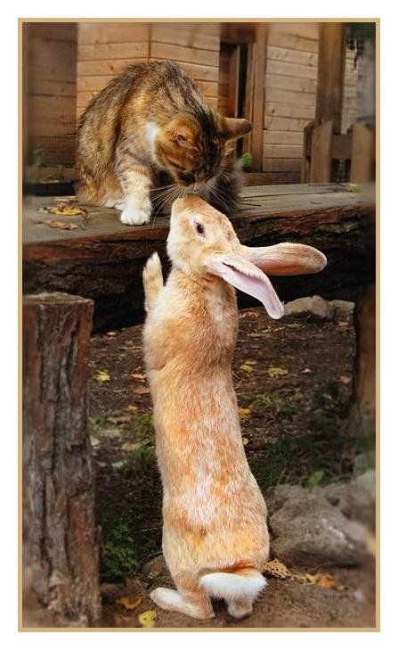 kitty and bunny are friends