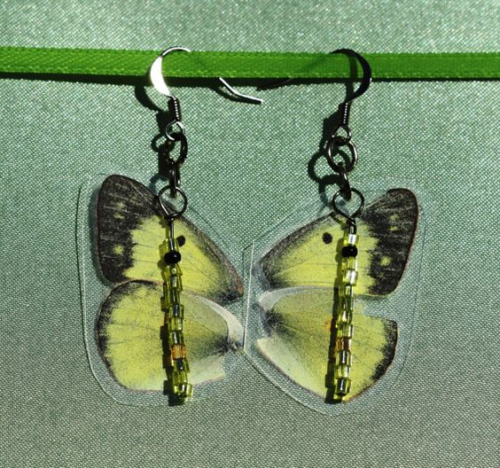 Real Butterfly Wing Earrings with Bead Accent by TheTangledVine