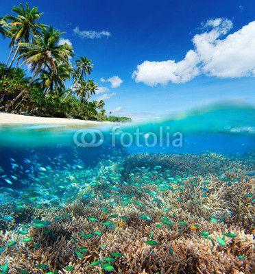 Fototapete coral reef in tropical sea. - korallen • PIXERS.de
