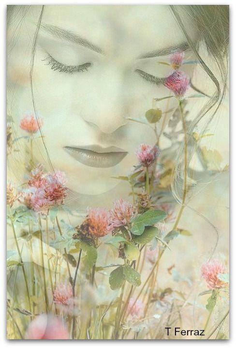 Cveće i romatika - Page 3 393806ea4aad37b9d1399a7fb2ea5403