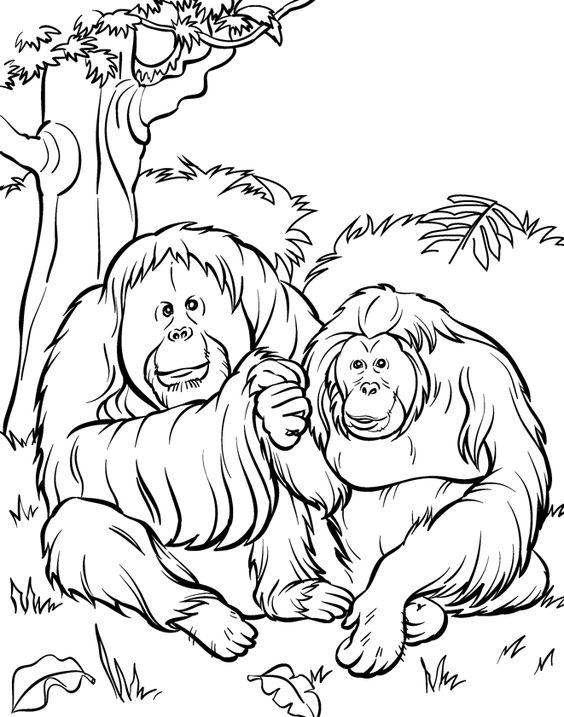 Top 25 Free Printable Zoo Coloring Pages Online Coloring pages - best of coloring pages to print animals