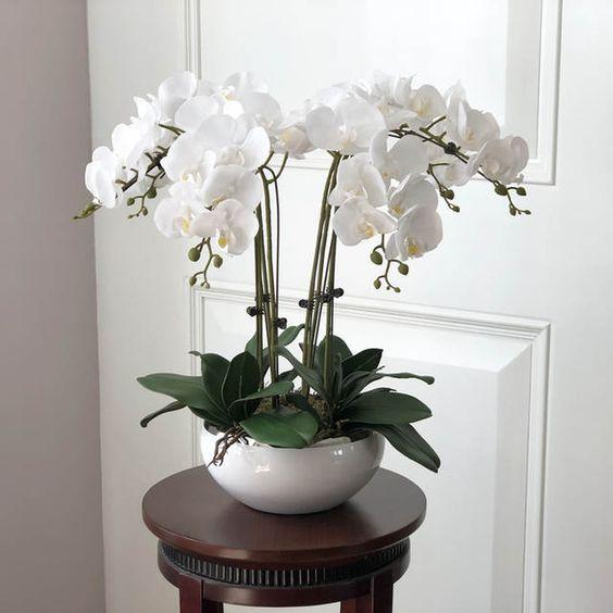 Orchid, flowering indoor plants