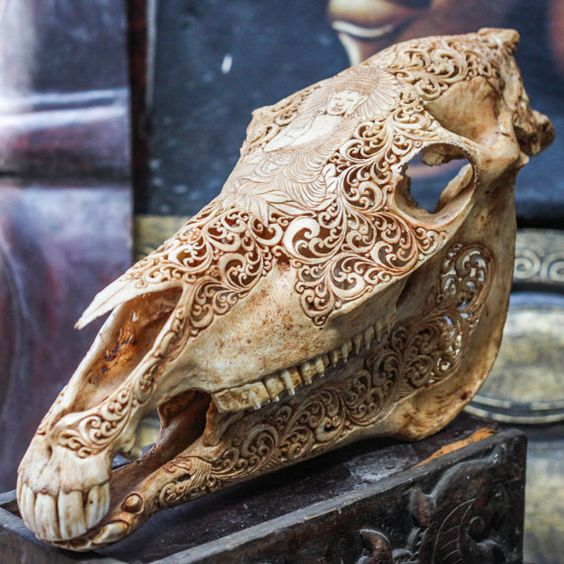 Hand Carved Buddha Horse Skull Real Mule/ Animal Skull Bone with Teeth/ Vintage Taxidermy