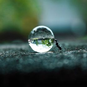 I LOVE micro and Macro photography! This is AWESOMENESS !