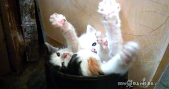 死んだ。3回萌え死んだ。3匹の子猫が長靴の中でくんずほぐれつ : カラパイア