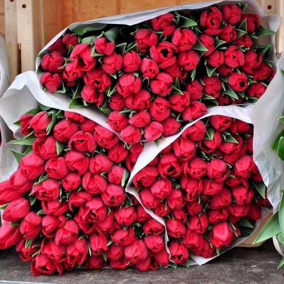 Colors of Life - Ein Rot wie es nur der Frühling / Frühsommer zustande bringen kann #spring #frühling #flower #tulip #blume #blüte #tulpe #rot #red #colors #life #uwebwerner