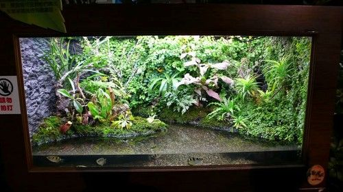 Archer Fish Tank   Interesting Natural Behaviors Of Some Fish Species Such As These