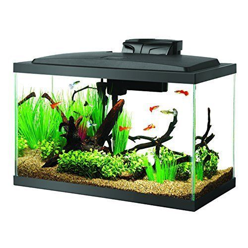 Aquarium Fish Tank Starter Kit W Led Lighting 100w Preset Heater With Images 10 Gallon Fish Tank Aquarium Fish Tank Cool Fish Tanks