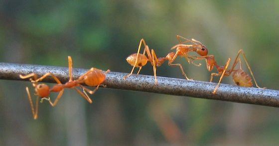 Diese natürlichen Hausmittel helfen gegen Ameisen Natürliche - was hilft gegen ameisen in der k che