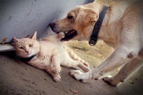 O cão e o gato vivem a quase três anos juntos, e desde o primeiro dia eles se deram muito bem.