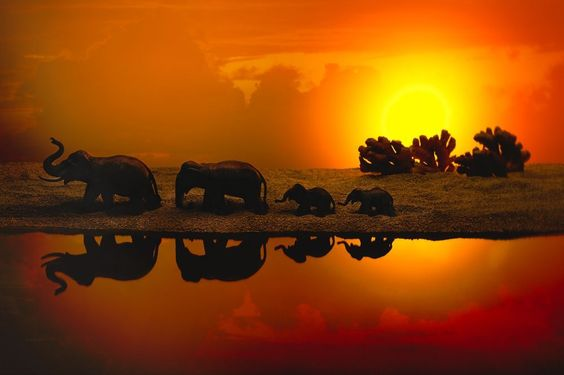 Illusion of Africa - elephants family Photo by Julia Wimmerlin — National Geographic Your Shot