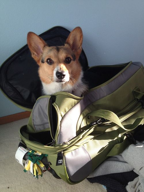 Don't leave me, I want to come with you!