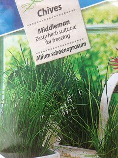 VIDA FELIZ: na Horta: Como Semear, Plantar e Colher CEBOLINHO