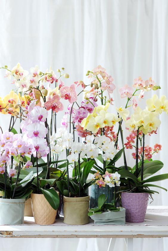 A virágok szerelmeseinek